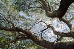 Ramificaciones y cielo de árbol imagenes de archivo