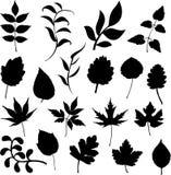 Ramificaciones y hojas Foto de archivo