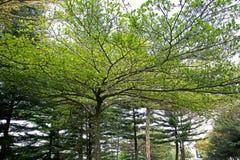 Ramifican los árboles Imagen de archivo libre de regalías