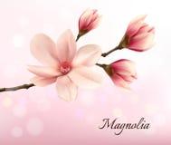 Ramifichi con due fiori rosa della magnolia Fotografia Stock