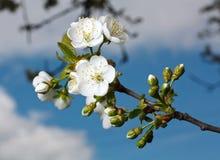 Ramifichi con i fiori Fotografia Stock Libera da Diritti