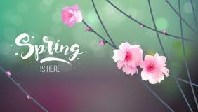 Ramifichi con i fiori di fioritura royalty illustrazione gratis