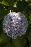 Ramifichi con i fiori lilla su un fondo verde fotografie stock libere da diritti