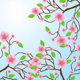 Ramifichi con i fiori rosa su un fondo blu Fotografia Stock