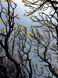 Ramifichi con i fogli ed i bei fiori della sorgente Immagini Stock