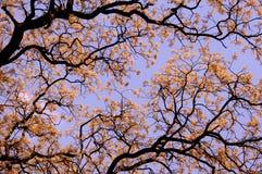Ramifichi con i fogli ed i bei fiori della sorgente Fotografia Stock