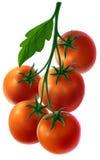 Ramifichi con i pomodori freschi Fotografia Stock Libera da Diritti