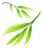 Ramifichi con le foglie di bambù verdi Illustrazione di vettore EPS10 su fondo bianco Fotografie Stock Libere da Diritti