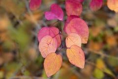 Ramifichi con le foglie di rosso ed arancio Fotografie Stock Libere da Diritti
