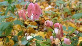 Ramifichi con le foglie rosse nella foresta di autunno video d archivio