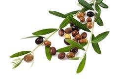 Ramifichi con le olive Fotografia Stock Libera da Diritti