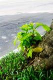 Ramifichi dell'albero Immagine Stock Libera da Diritti