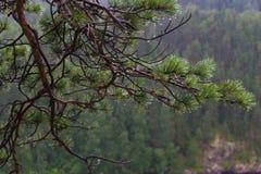Ramifichi dopo la pioggia Fotografie Stock