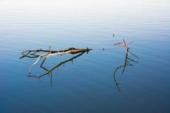 Ramifichi nell'acqua Fotografia Stock Libera da Diritti