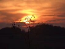 Ramifichi nell'ambito del tramonto immagini stock