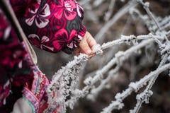 Ramifichi nella brina nelle mani del bambino Fotografia Stock Libera da Diritti