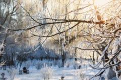 Ramifichi nella neve nella lampadina dal sole Immagini Stock