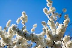 Ramifichi in primavera contro il cielo Fotografia Stock