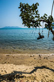 Ramifichi sulla spiaggia Fotografia Stock Libera da Diritti