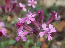 A ramified purple flower stock image