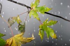 Ramifique bajo la lluvia otoñal fotos de archivo libres de regalías
