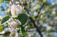 Ramifique com as folhas da flor e do verde Foto de Stock Royalty Free