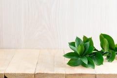 ramifique com as folhas verdes na tabela Fotos de Stock Royalty Free