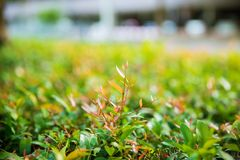 Ramifique com as folhas verdes novas Ramo de árvore Foto de Stock