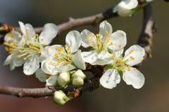 Ramifique com flor imagem de stock