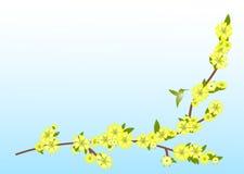 Ramifique com flores amarelas ilustração stock