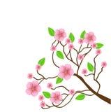 Ramifique com flores cor-de-rosa em um fundo branco Imagem de Stock
