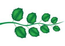 Ramifique com folhas Ilustração do Vetor