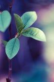 Ramifique com folhas Imagens de Stock
