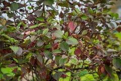 Ramifique com folhas Foto de Stock