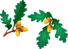 Ramifique com folhas do carvalho Fotografia de Stock