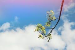 Ramifique com o céu bonito da flor verde com nuvens e luz solar Imagem de Stock