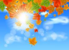 Ramifique con Autumn Maple Leaves Imágenes de archivo libres de regalías