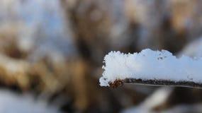 Ramifique con la nieve 1 Foto de archivo