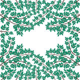 Ramifique con las hojas en un fondo blanco Fotografía de archivo libre de regalías