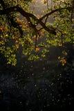 Ramifique con las hojas y los mosquitos coloful en puesta del sol fotografía de archivo libre de regalías