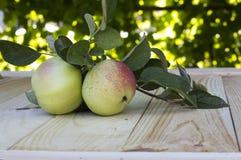 Ramifique con las manzanas Fotografía de archivo libre de regalías