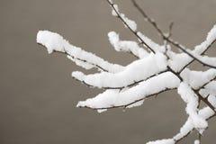 Ramifique con nieve Foto de archivo