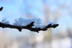 Ramifique con nieve Fotos de archivo libres de regalías