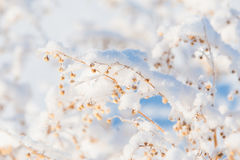 Ramifique debajo de nevadas fuertes foto de archivo libre de regalías