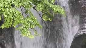 Ramifique delante de la cascada almacen de metraje de vídeo