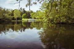 Ramifique e borrou o lago maio dourado imagens de stock