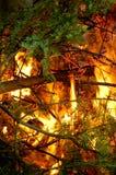 Ramifique en el fuego fotografía de archivo libre de regalías