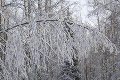 Ramifique en la nieve Fotografía de archivo