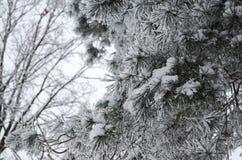 Ramifique en la nieve Imagen de archivo