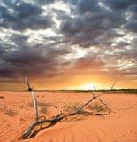 Ramifique en un desierto Fotos de archivo